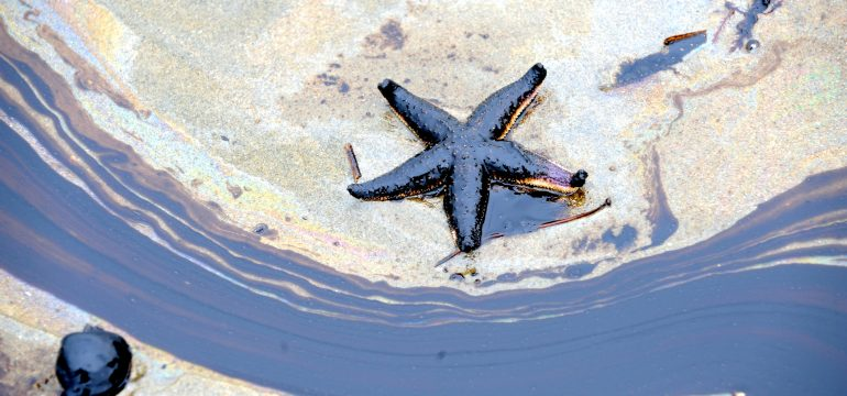 Starfish and oilspill