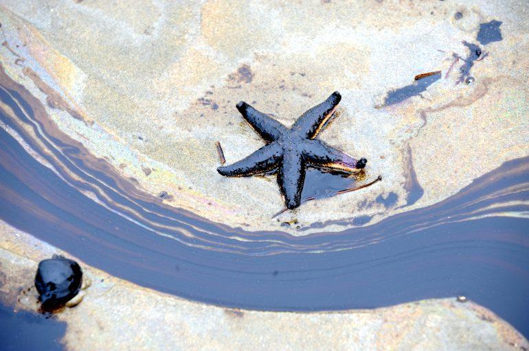 Starfish and oilspill