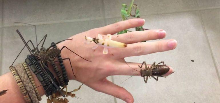 insecte-main