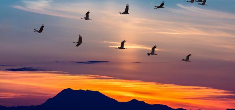 la-lumiere-artificielle-desoriente-les-oiseaux-migrateurs