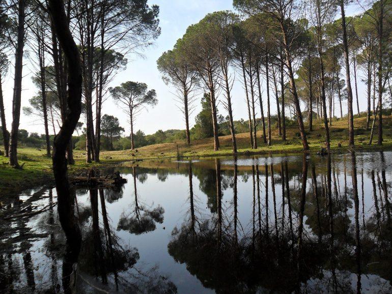 Parc_National_d'El-Kala_6