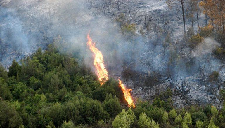 plusieurs hectares  composés de diverses essences ont été détruits par les incendies de forêt