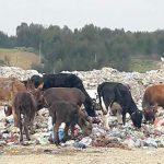MERDJ BOUCHEBEL (SKIKDA) :Les habitants dénoncent des agressions contre l'environnement